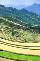 China, Yunnan, Yuanyang Co, Rice Terraces, Mount Ailo Fine Art Print