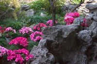 Flowers and Rocks in Traditional Chinese Garden, China Fine Art Print