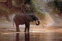 Elephant at Water Hole, South Africa Fine Art Print