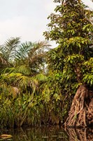 Africa, Liberia, Monrovia. Plantlife along the Du River. Fine Art Print