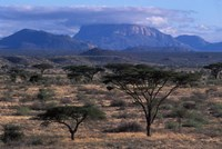 Acacia and Distant Massif North of Mt Kenya, Samburu National Reserve, Kenya Fine Art Print
