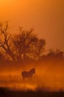 Burchell's Zebra at Sunset, Okavango Delta, Botswana Fine Art Print