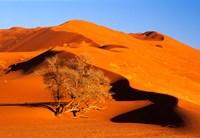 Elim Dune Overcomes, Sesriem, Namib Naukluft Park, Namibia Fine Art Print