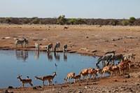 Africa, Namibia, Etosha. Black Faced Impala in Etosha NP. Fine Art Print