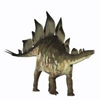 Stegosaurus dinosaur Fine Art Print