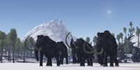 A herd of Woolly Mammoths migrate to a warmer climate in the Pleistocene Age Fine Art Print
