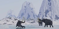 A Woolly Mammoth struggles for survival as he falls through ice on a frozen lake Fine Art Print