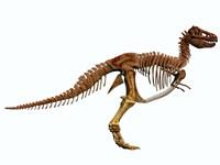 Tyrannosaurus Rex dinosaur skeleton Fine Art Print