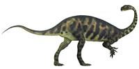 Massospondylus dinosaur fromt he Jurassic Age of Africa Framed Print