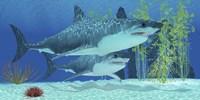 Two Megalodon sharks from the Cenozoic Era Fine Art Print