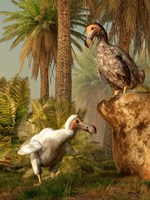 A pair of Dodo birds play a game of hide-and-seek Fine Art Print