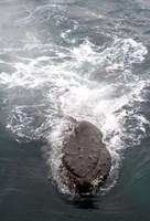 Humpback Whales in Antarctica Fine Art Print
