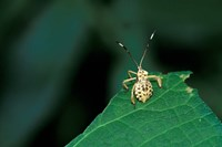 Insect on Green Leaf, Gombe National Park, Tanzania Fine Art Print