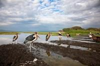 Marabou Storks, fish market in Awasa, Ethiopia Fine Art Print
