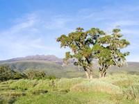 Mount Kenya NP, Site in the highlands of central Kenya, Africa. UNESCO Fine Art Print