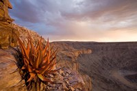 Namibia, Fish River Canyon National Park, desert plant Fine Art Print