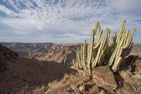 Namibia, Fish River Canyon NP, Cactus succulent Fine Art Print