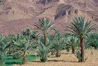 Palmery Below Mountains, Morocco Fine Art Print