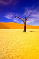 Skeleton Trees in Dead Vlei, Namibia Fine Art Print