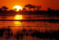 Setting Sun over Lush Banks, Chobe National Park, Botswana Fine Art Print