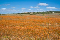 Field of Spring flowers, South Africa Fine Art Print