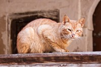 Stray Cat in Fes Medina, Morocco Fine Art Print