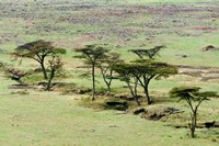 The Bush, Maasai Mara National Reserve, Kenya Fine Art Print