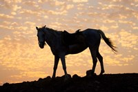 Sunrise and Silhouette of Horse and rider on the Giza Plateau, Cairo, Egypt Fine Art Print