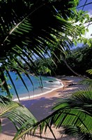 Tropical Foliage and Beach, Seychelles Fine Art Print