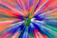 Zoom Abstract of Pansy Flowers Fine Art Print