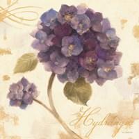 Abundant Hydrangea I Fine Art Print