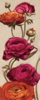Free Range Roses II Fine Art Print