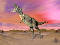 Aucasaurus dinosaur roaring in the desert by sunset Fine Art Print