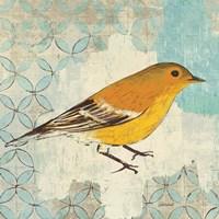 Pine Warbler Framed Print