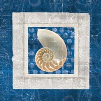 Sea Shell II on Blue Fine Art Print