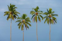 Coconut trees in Backwaters, Kerala, India Fine Art Print