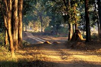 Rural Road, Kanha National Park, India Framed Print