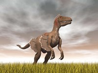Velociraptor dinosaur standing in the yellow grass Fine Art Print