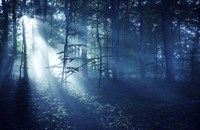 Beam of light in a dark forest, Liselund Slotspark, Denmark Fine Art Print