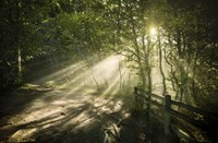 Sunrays shining through a dark, misty forest, Liselund Slotspark, Denmark Fine Art Print
