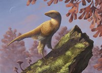 Eosinopteryx brevipenna perched on a tree branch Fine Art Print