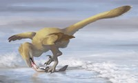 Deinonychus antirrhopus preys on a fish Fine Art Print