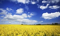 Wind turbine in a canola field against cloudy sky, Denmark Fine Art Print