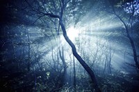 Sun rays in a dark forest, Liselund Slotspark, Denmark Fine Art Print