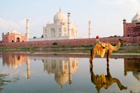 Young Boy on Camel, Taj Mahal Temple Burial Site at Sunset, Agra, India Fine Art Print