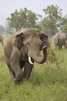 Elephant Greeting, Corbett National Park, Uttaranchal, India Fine Art Print