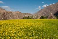 Mustard flowers and mountains in Alchi, Ladakh, India Fine Art Print