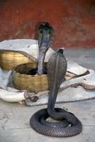 Snake Charming, Oris, India Fine Art Print