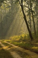 Morning Light, Kanha National Park, India Fine Art Print