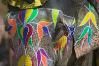 Elephant Decorated with Colorful Painting, Jaipur, Rajasthan, India Fine Art Print